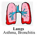 chinese medicines herbals lungs